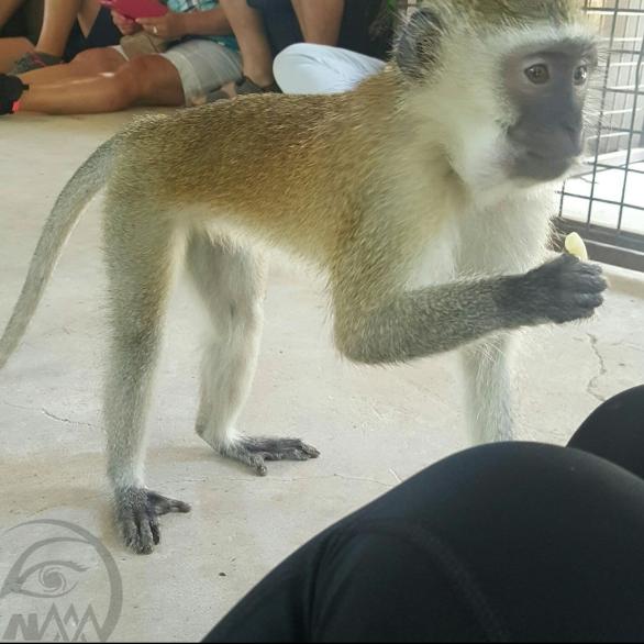 monkey20170402_215503