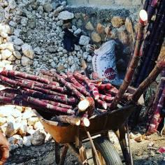 Haiti Argriculture