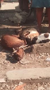 Haiti Agriculture